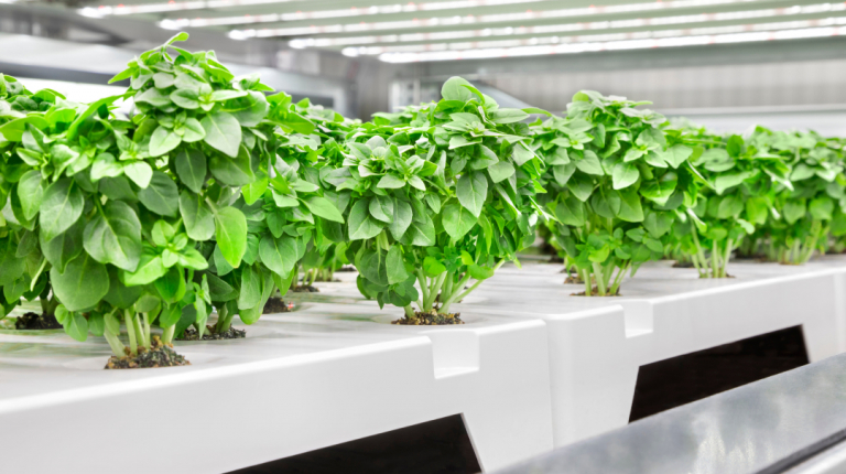 Infarm raises $170M during pandemic to grow largest urban vertical farming network in the world