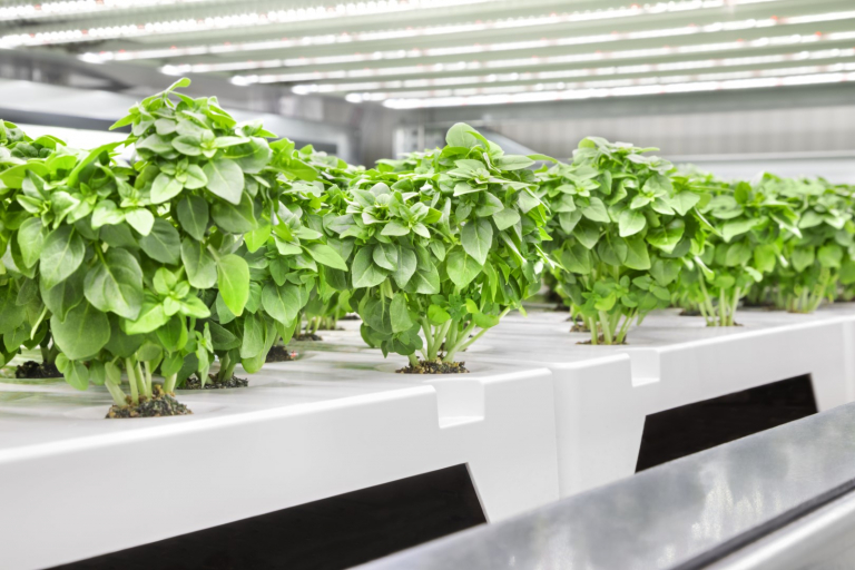 Infarm to open one of the largest vertical farming facilities in europe